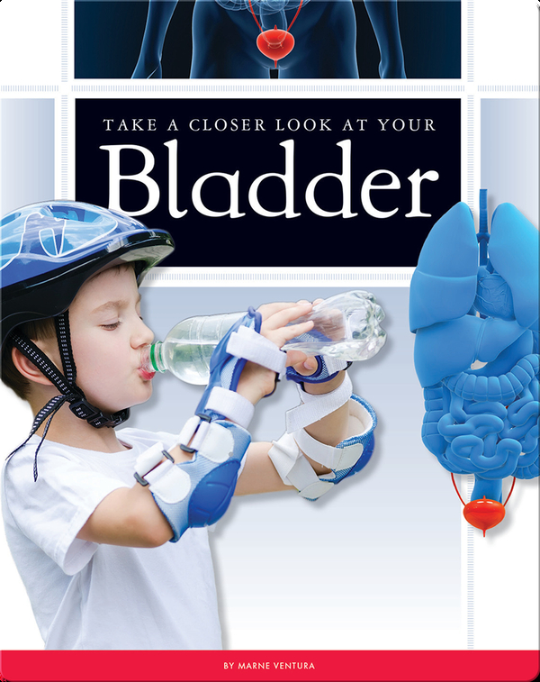 Take a Closer Look at Your Bladder