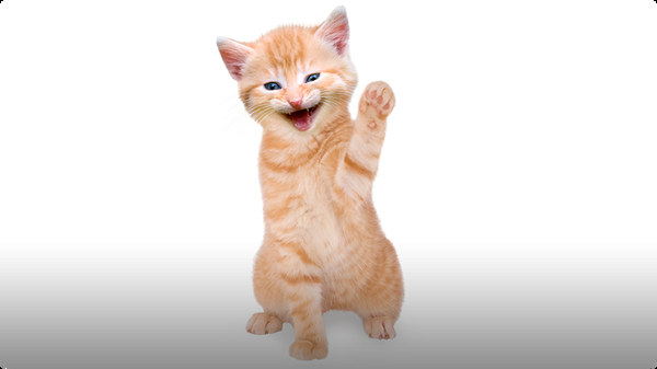 Train Your Cat to Wave Goodbye!
