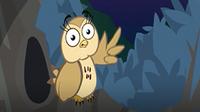 I'm an Owl