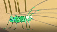 I'm a Tiger Beetle