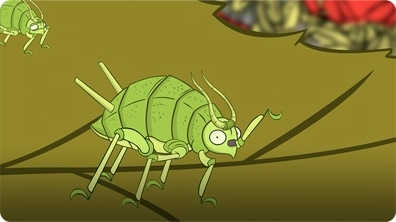 I'm an Aphid