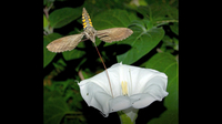 How Flowers Attract Insects