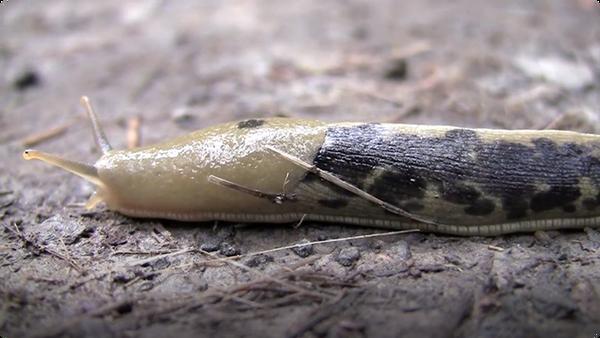 Slugs Are Cool