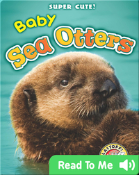 Super Cute! Baby Sea Otters