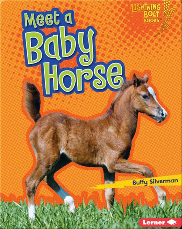 Meet a Baby Horse