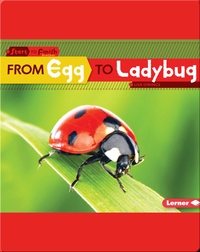 From Egg to Ladybug