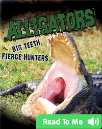 Alligators. Big Teeth. Fierce Hunters!