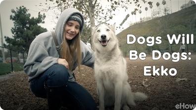 Ekko | Dogs Will Be Dogs