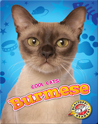 Cool Cats: Burmese