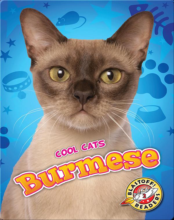 Cool Cats: Burmese