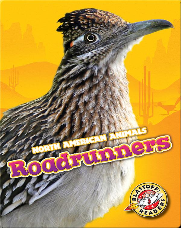 North American Animals: Roadrunners