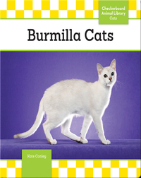 Burmilla Cats