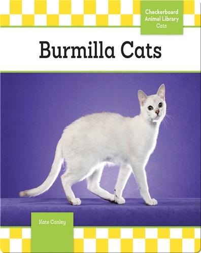 Burmilla Cats