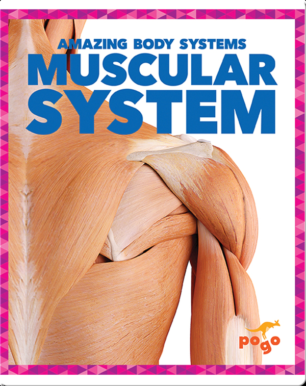 Amazing Body Systems: Muscular System