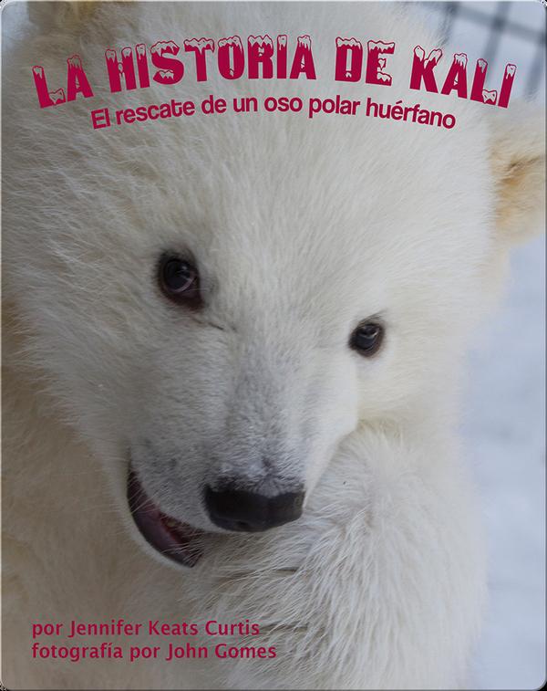 La historia de Kali: El rescate de un oso polar huérfano