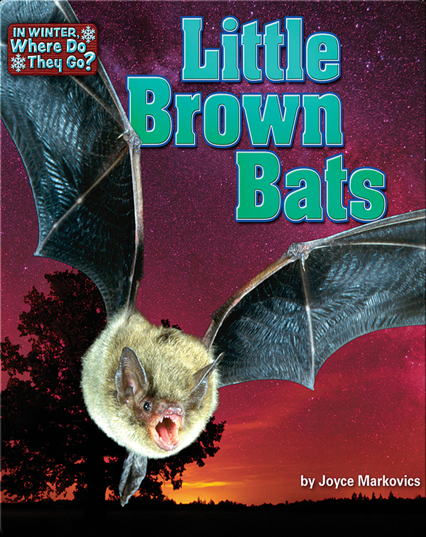 Little Brown Bats