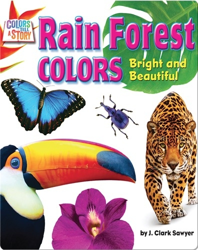 Rain Forest Colors