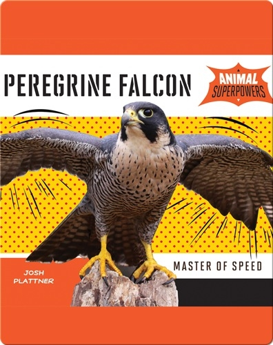 Peregrine Falcon: Master of Speed