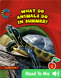 What Do Animals Do in Summer?