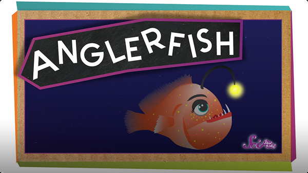 SciShow Kids: All About Anglerfish