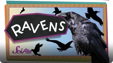 SciShow Kids: 4 Things You Didn't Know About Ravens