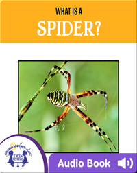 What Is A Spider?