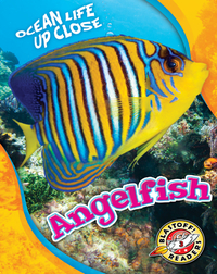 Ocean Life Up Close: Angelfish