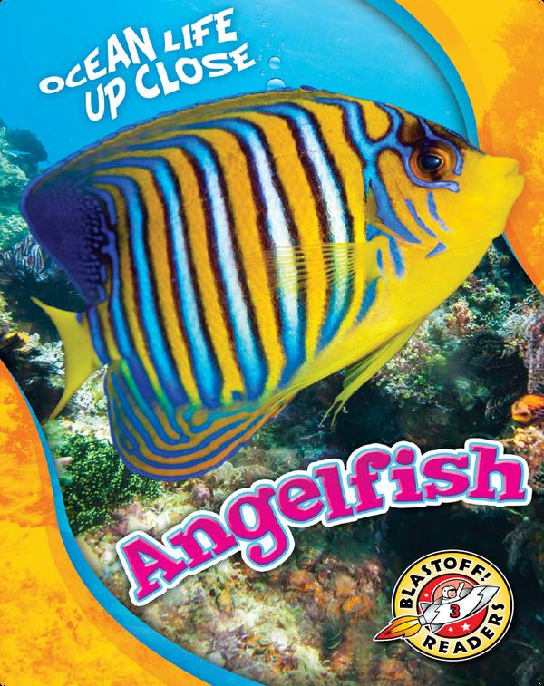 Ocean Life Up Close: Angelfish