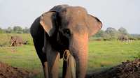 Gabby Wild: Let's Learn about Elephants