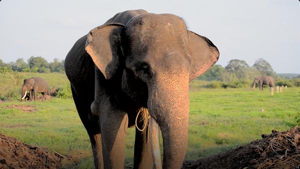 Gabby Wild: Let's Learn about Elephants