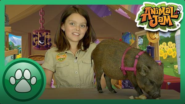 8 Amazing Pig Facts!