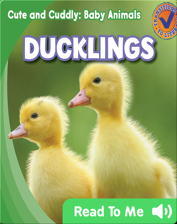 Cute and Cuddly: Ducklings