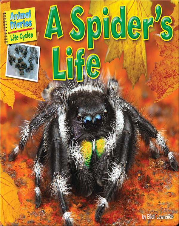 A Spider's Life