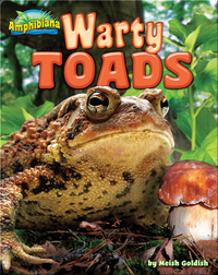Warty Toads
