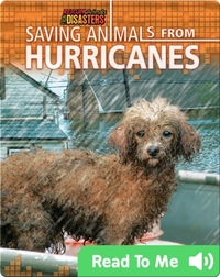 Saving Animals from Hurricanes
