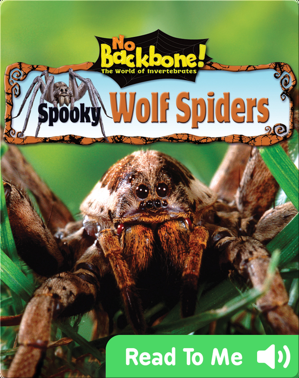 Spooky Wolf Spiders