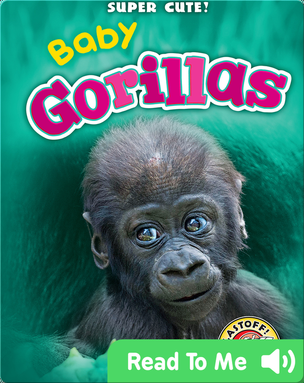 Super Cute! Baby Gorillas
