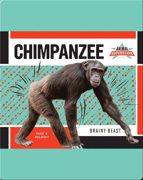 Chimpanzee: Brainy Beast