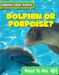 Dolphin or Porpoise?