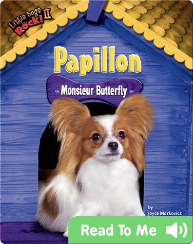 Papillon: Monsieur Butterfly