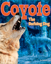 Coyote: The Barking Dog