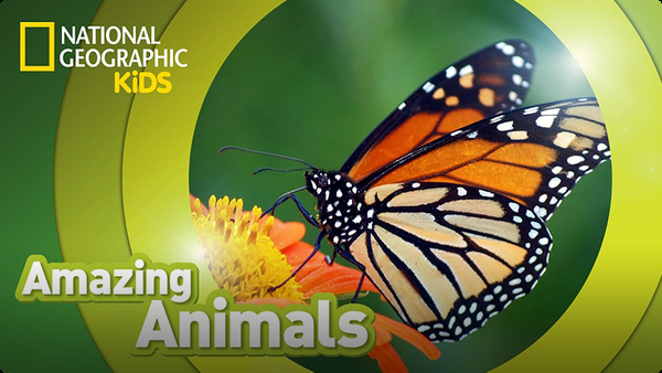Amazing Animals: Monarch Butterfly