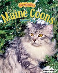 Maine Coons: Super Big