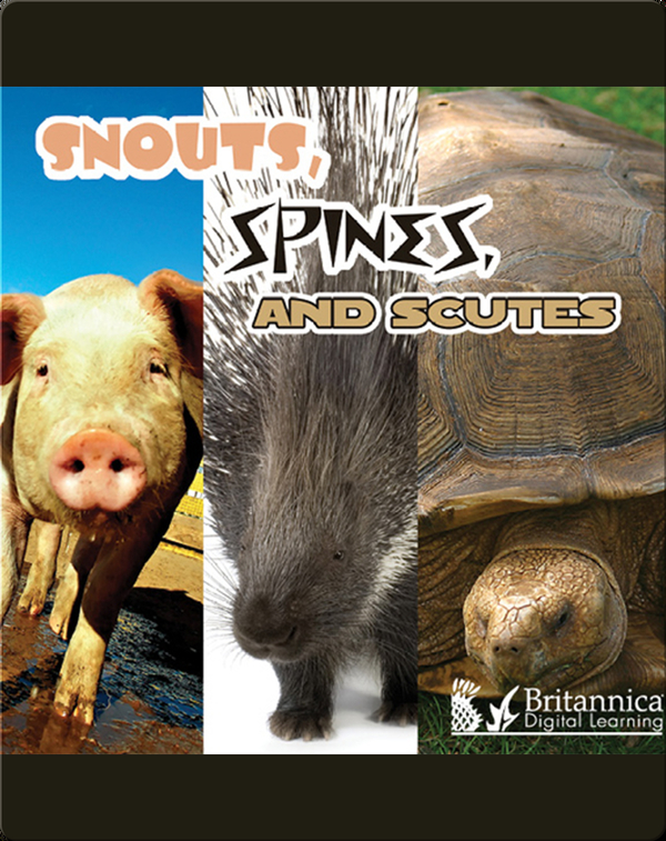 Snouts, Spines, and Scutes