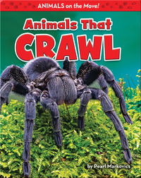 Animals That Crawl