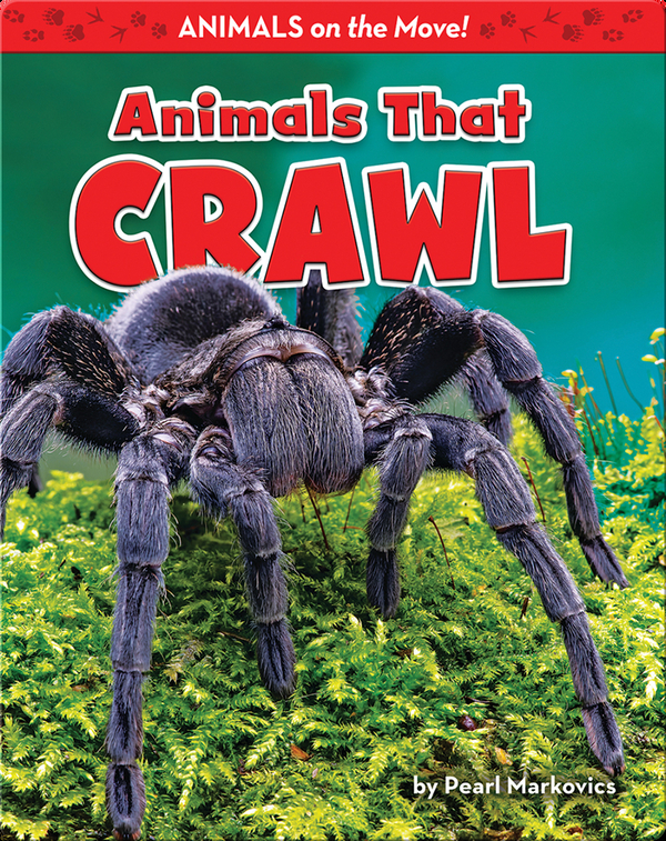 Animals That Crawl