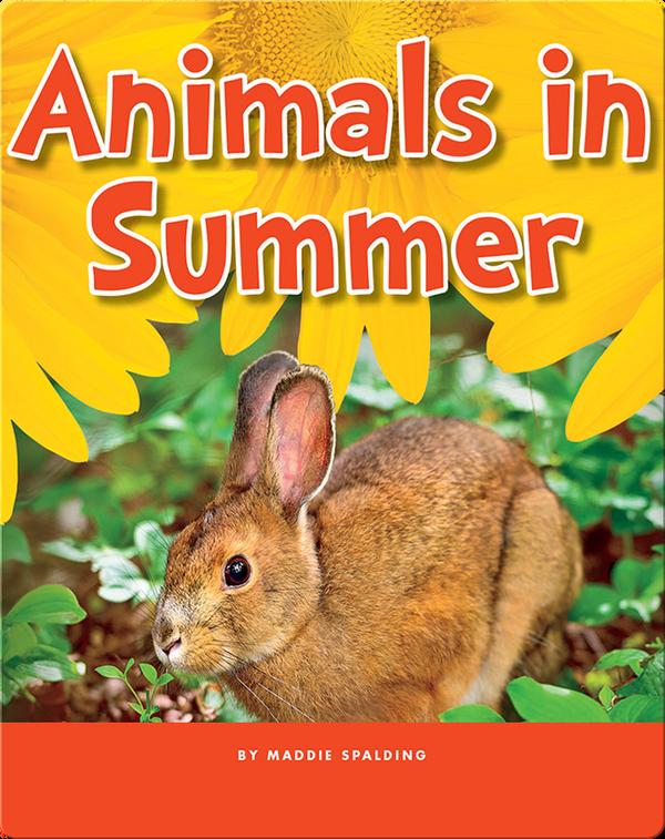 Animals in Summer