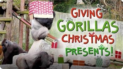 Giving Gorillas Christmas Presents!