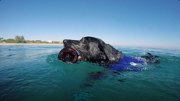 Dog Dives to Help Clean Polluted Oceans
