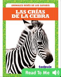 Las crías de la cebra (Zebra Foals)